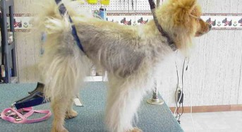 What We Know and Don't Know About Canine Hair Growth