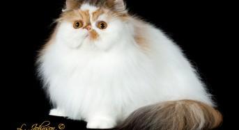 Cat = Dog?
