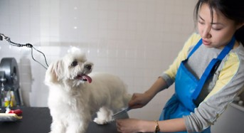Selecting a Pet Grooming School