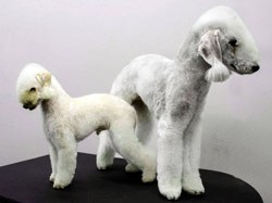 Mix It Up: A Poodle in Disguise
