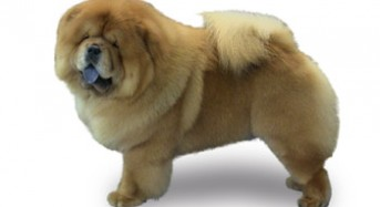 Insights on Harder-to-Groom Dogs